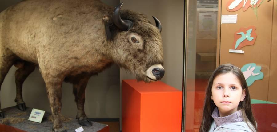 Un bison nous surprend.