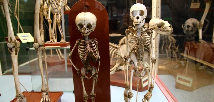 Des squelettes fascinants.