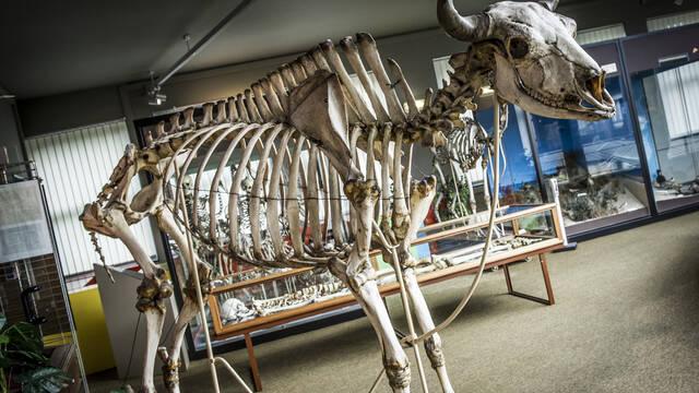 Op ontdekkingstocht in het Regionaal Museum voor Natuurwetenschappen