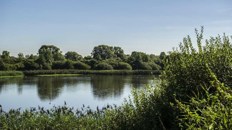 Het natuurgebied van Les Marionville, een oase voor vogels