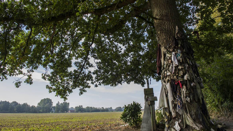 De boom met spijkers van Herchies, tussen geloof en mysterie