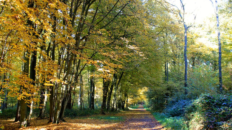 Het bos van Colfontaine